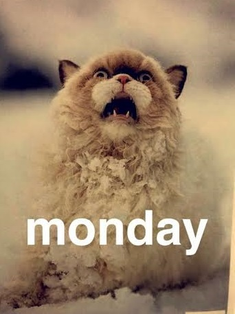 monday meme cat