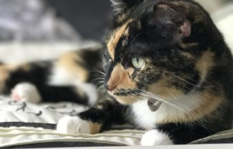 10 Things to Know about Cat Adoption (+ How to Prep your Home!)