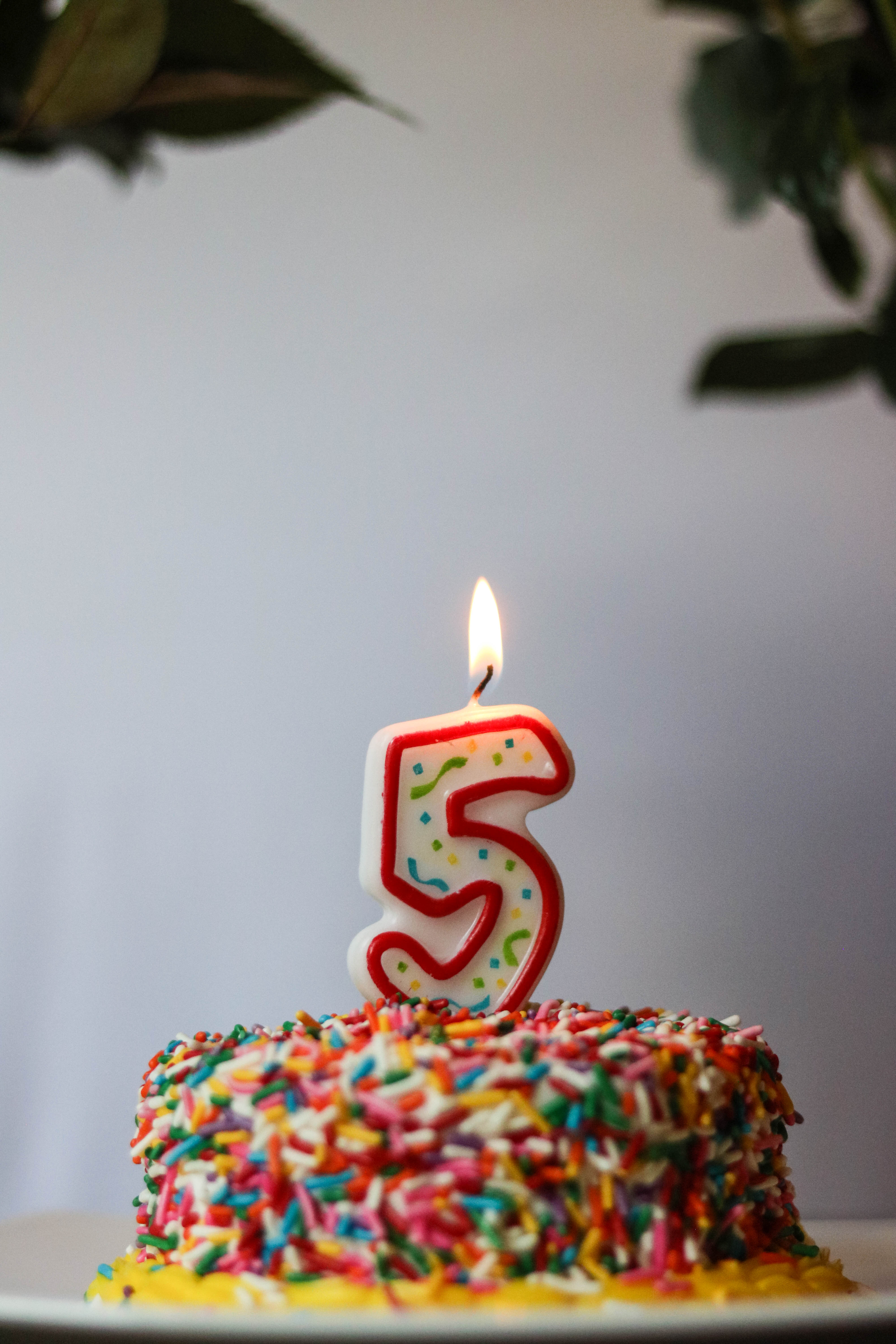 Happy Birthday, Coming Up Roses! Celebrating my 5-year Blogiversary with a look back at the highest highs and lowest lows (and everything in between).
