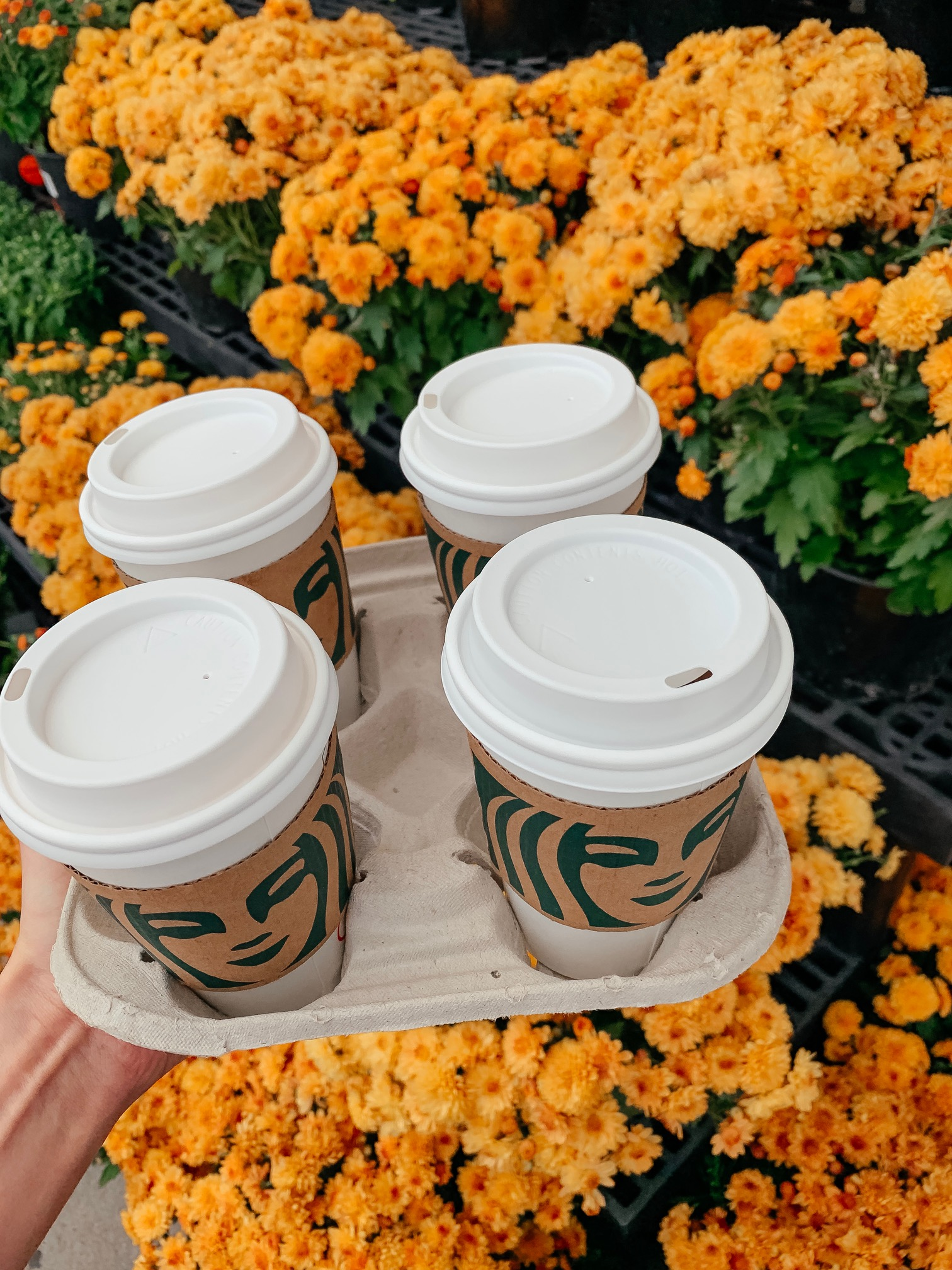 5 Cozy Fall Starbucks Drinks (that aren't a Pumpkin Spice Latte) - on Coming Up Roses