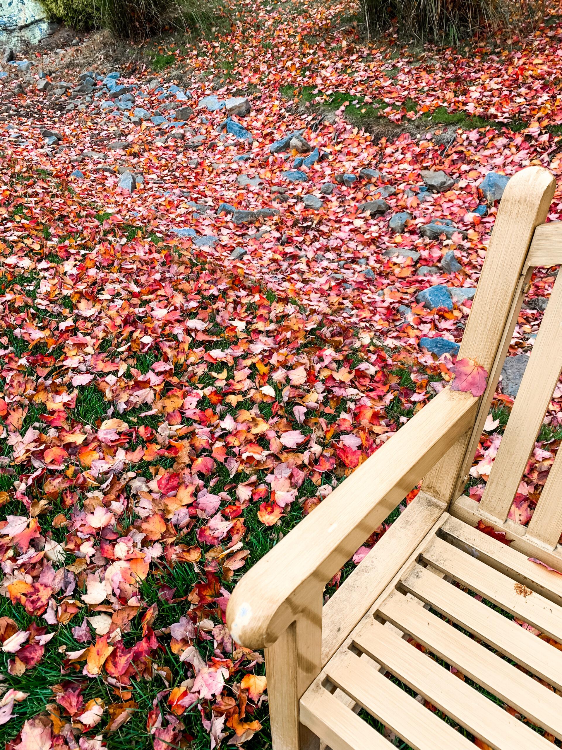 THE WOODLOCH RESORT - Resort Review + Trip Recap on Coming Up Roses